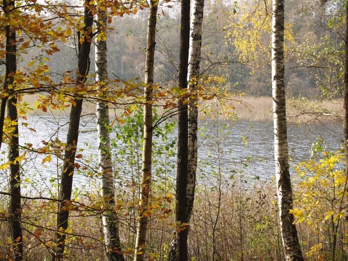 Uprzejmie informujemy, że cały teren Ośrodka Wypoczynkowego w Piasutnie wchodzi w obszar Puszczy Piskiej.  Wobec powyższego, na podstawie ustawy z dnia 16 kwietnia 2004r. o ochronie przyrody  (Dz. U. Nr 92 poz. 880) obowiązuje pod groźbą sankcji karnych całkowity zakaz wycinki                                    i uszkadzania (łamania, obrywania gałęzi) wszelkich drzew i   krzewów znajdujących się na terenie Ośrodka Wypoczynkowego.