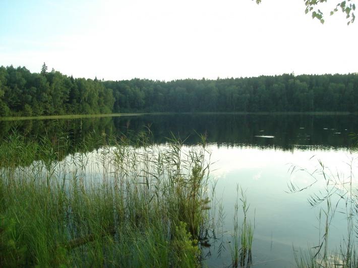 piękne 2-gie jezioro w lesie